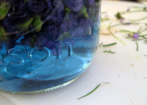 steeping_violets