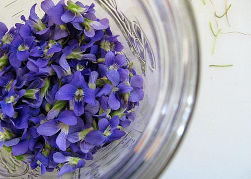 violets2