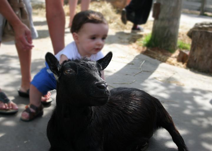 goat-zoo