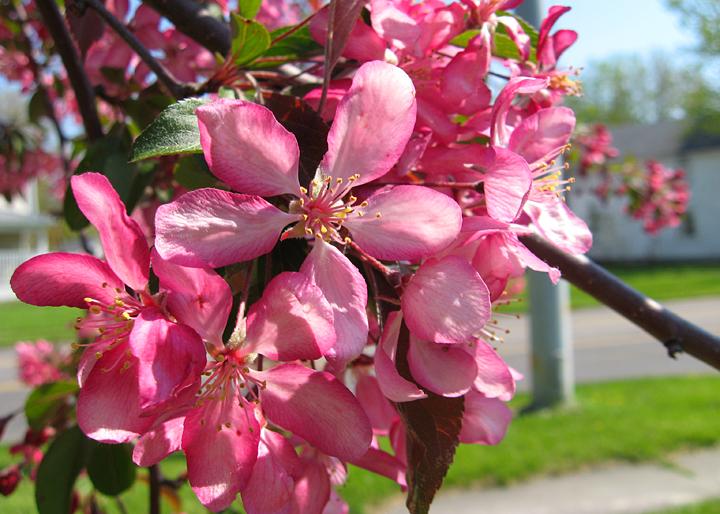 spring2015-3